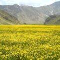 زیبایی های پارک ملی لار