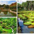 باغ گیاهشناسی ملی ایران،زیباترین باغ ایران