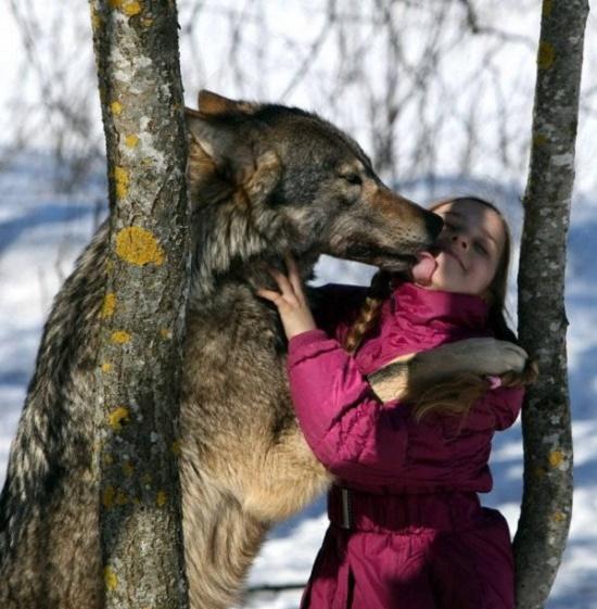 خانوادهای که گرگ، حیوان خانگیشان است + تصاویر