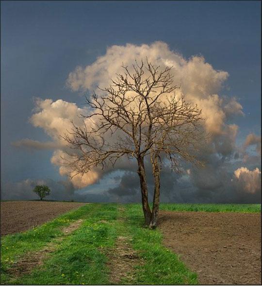 درخت ابر!+عکس