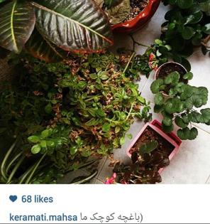 باغچه کوچک و دیدنی مهسا کرامتی+عکس