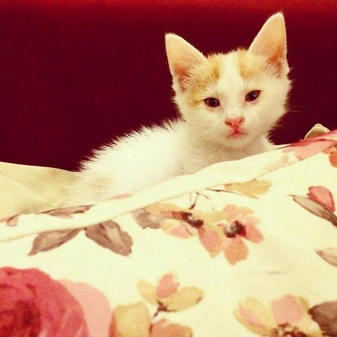 ملیکا شریفی نیا و خاطره گربهای که از جوی آب پیدا شد!+عکس