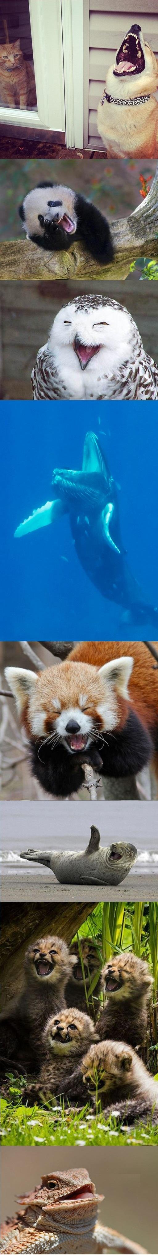 خنده حیوانات+ تصاویر