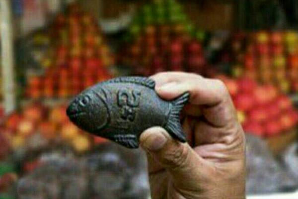ماهی شانس که میتواند جان میلیون ها آدم را نجات دهد!+عکس