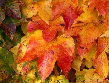 پاییز پادشاه فصل ها و عکسهای زیبا از این فصل!+تصاویر