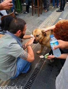 انسانیت