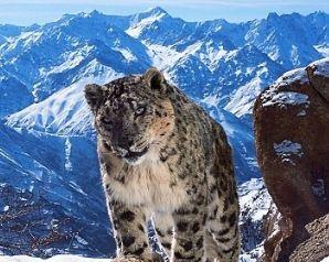 عکسهایی از حیوانات مختلف که زیبایی و جذابیت خاصی دارند!+تصاویر