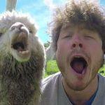 عکسهایی تماشایی از سلطان سلفی با حیوانات(1)!+تصاویر