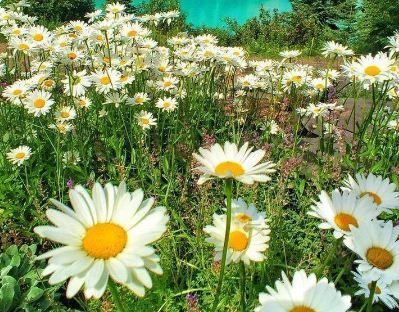 زیبایی های طبیعت در لنز دوربین عکاسان توییتر(۱)+تصاویر