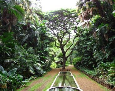 طبیعت هاوایی و باغ های زیبا در آن!+تصاویر