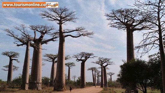 عجیب ترین جنگل های جهان