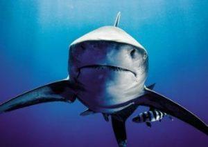 عکاسی از یکی از درنده ترین جانوران جهان!+تصاویر