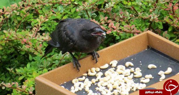 هدیه آوردن پرنده ها