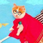 عکسهای آتلیه ای و شگفت انگیز از یک گربه!+تصاویر
