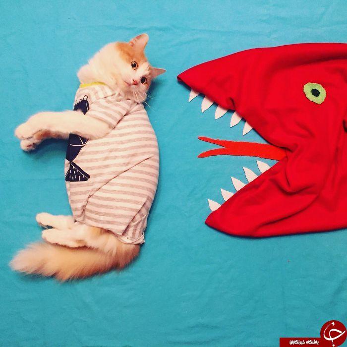 عکسهای آتلیه ای گربه