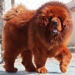 حیوانات دست آموز که بیش از هزاران دلار به فروش می رسند(2)!+تصاویر