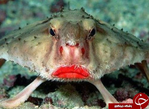 اخموترین ماهی