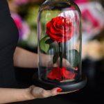 گل رزهایی که بمدت سه سال عمر می کنند!+تصاویر