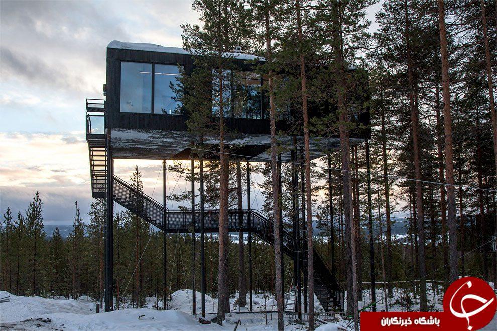 هتل درختی بسیار شیک در شمال سوئد!+تصاویر