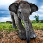 تصاویر منتخب حیات وحش در هفته گذشته!