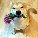 شبیه ترین سگ به انسان که نقاشی می کند!+تصاویر