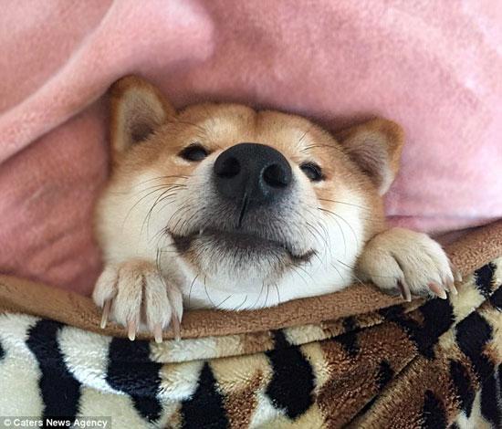شبیه ترین سگ به انسان