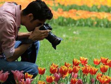 جشنواره گلهای پیازی در بوستان ملت شهر مشهد+تصاویر
