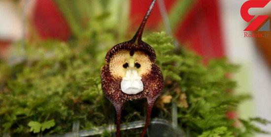عجیب ترین گل های جهان را ببینید!+تصاویر