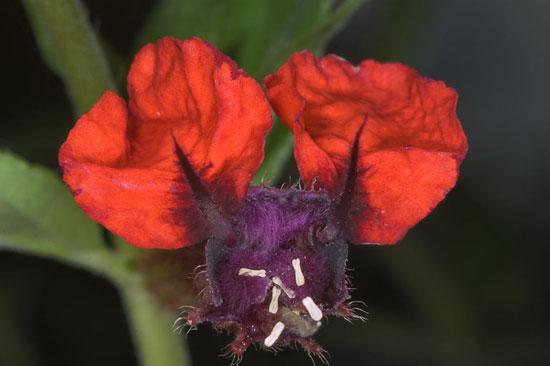 عجیب ترین گل های جهان