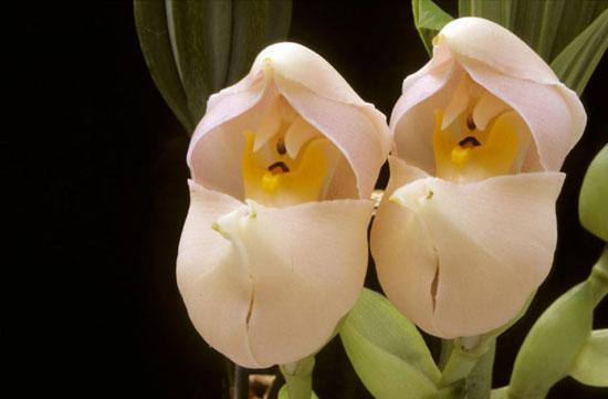 عجیب ترین گل ها