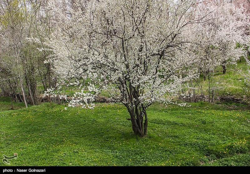 طبیعت بهار ایلام