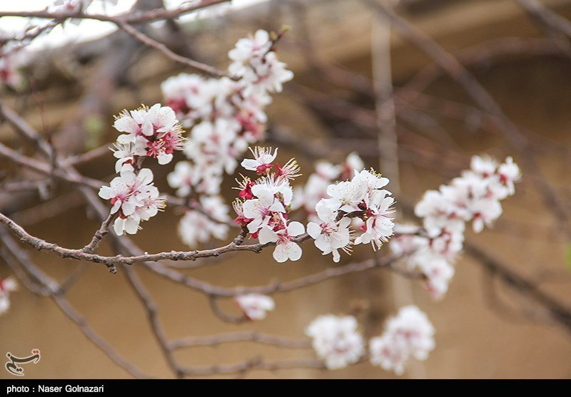 عکسهایی از طبیعت بهار ایلام را ببینید!