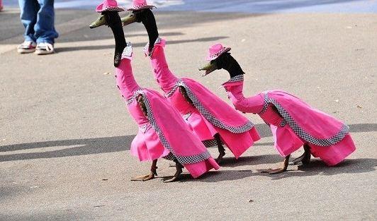 روز عید پاک و رژه مد اردک ها در استرالیا+تصاویر