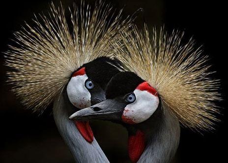تصاویری تماشایی از پرندگان!