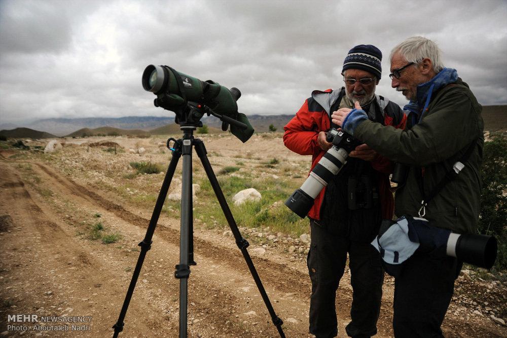 پارک ملی گلستان میزبان تیم پرنده نگری سوئدی شد!+تصاویر