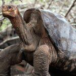 گونه های جانوری منقرض شده بر اثر سهل انگاری بشر!