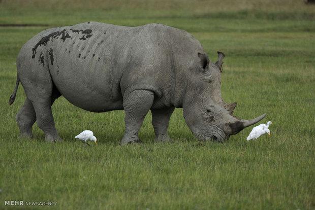 گونه های جانوری منقرض شده
