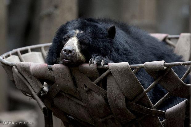 حیوانات افسرده و غمگین باغ وحش بوینس آیرس!