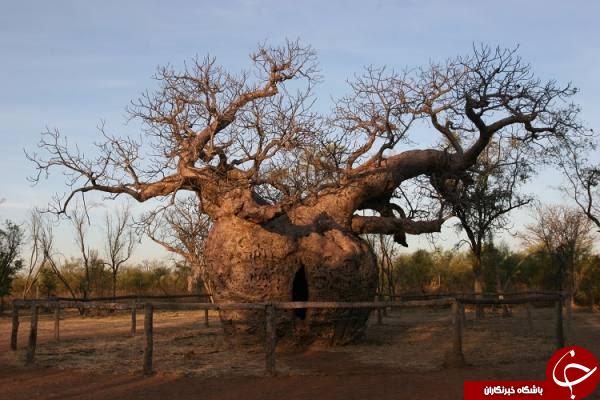 زندان در درخت