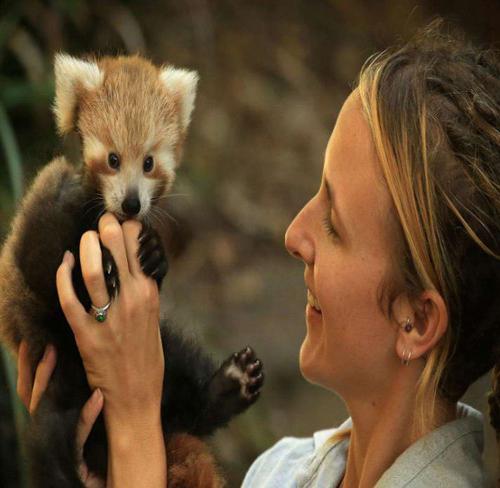 بچه های حیوانات مختلف در باغ وحش های گوناگون!+تصاویر