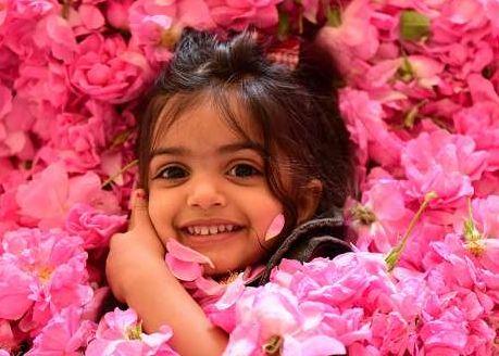 برداشت گل محمدی در شهرستان فیروزآباد!+تصاویر