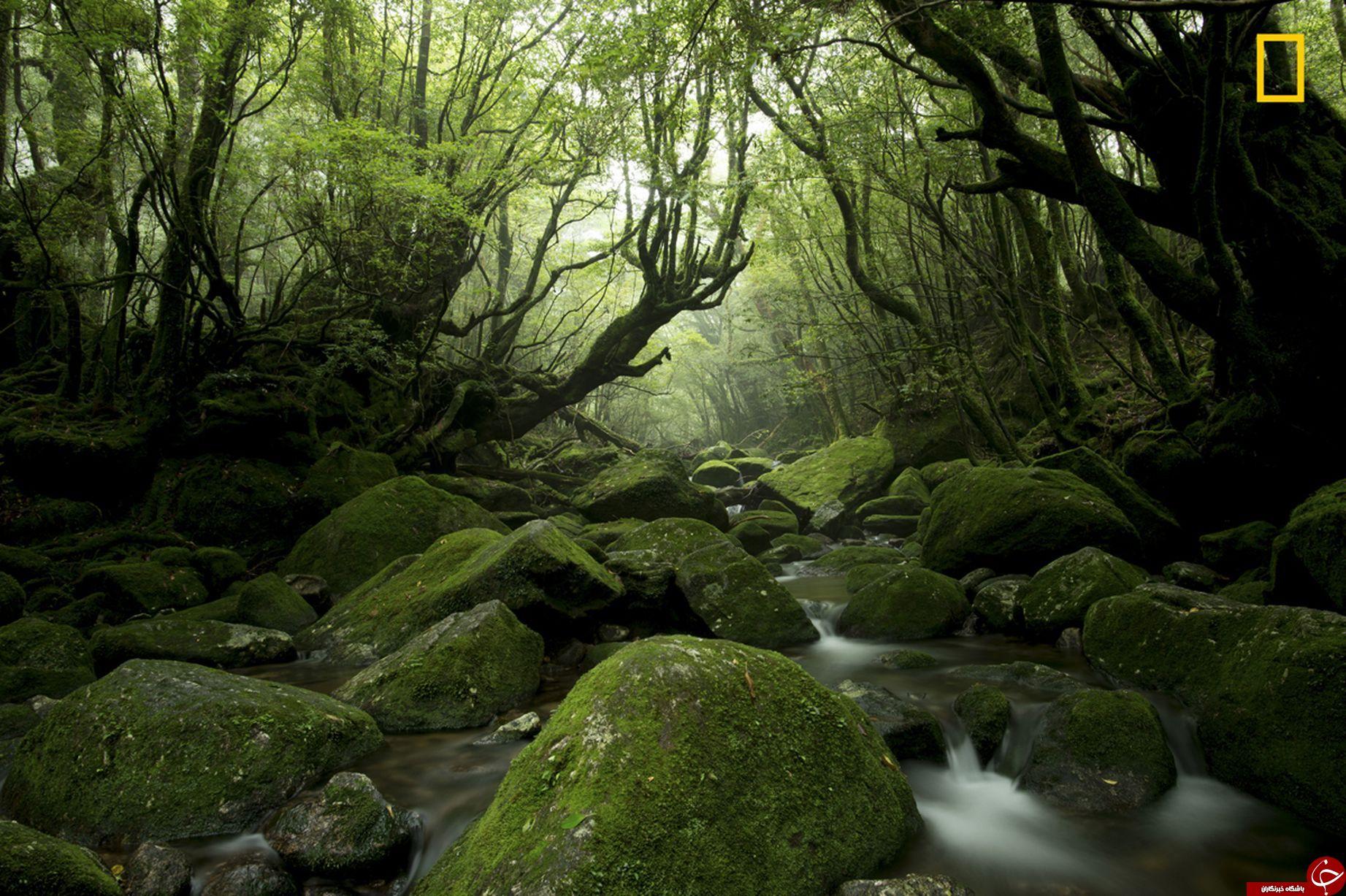 منظره های بی نظیر از طبیعت