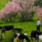 طبیعت زیبای منطقه سد ستارخان اهر در آذربایجان شرقی!