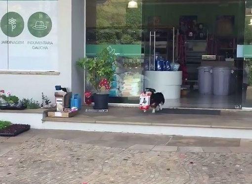 سگ برزیلی