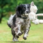 برندگان مسابقه عکاسی از سگ در سال 2017