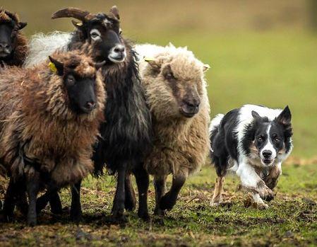 مسابقه عکاسی از سگ