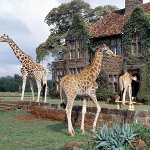 اقامت شگفت انگیز در کنار حیوانات وحشی در این هتل ها!