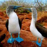 حیوانات عجیب و غریب که تا به حال ندیده اید!(2)