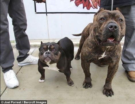 سگ 30 سانتیمتری