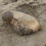 یافتن یک موجود عجیب و غریب در سواحل کالیفرنیا!
